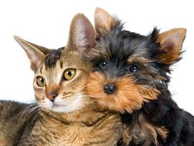 Katze und Hund © Ulf, Fotolia.com