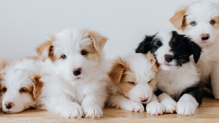Hundewelpen © Canva